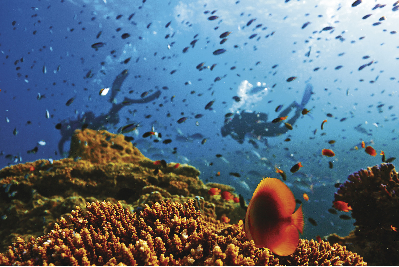An Aussie's guide to the Great Barrier Reef