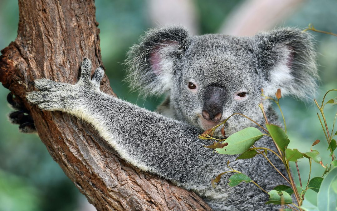 Stories from our backyard: Healesville Sanctuary