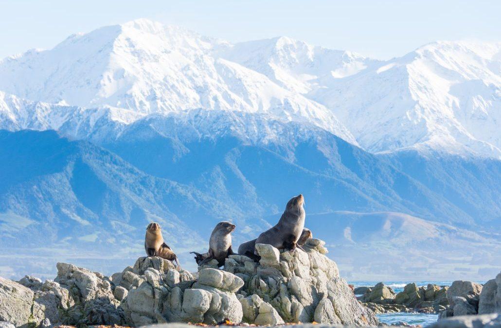 4 Must-do's in stunning Kaikoura, New Zealand