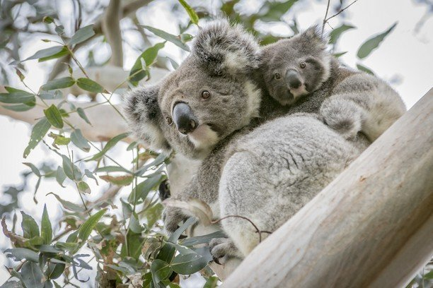 Update: Australia's Bushfire recovery
