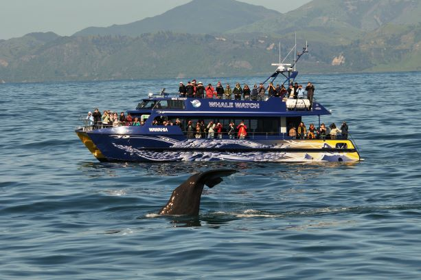Stories from our backyard: Whale Watch Kaikōura