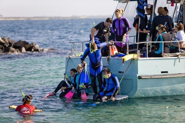 Sea All Dolphin Swims