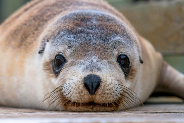 Stories from our backyard: Exploring the best of Kangaroo Island