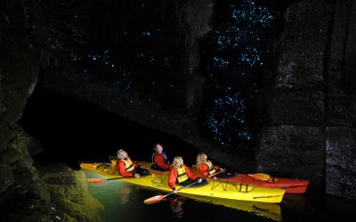 Stories from our backyard: Glow worm kayak tour